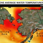 Alaska's warming ocean is putting food and jobs at risk, scientists say